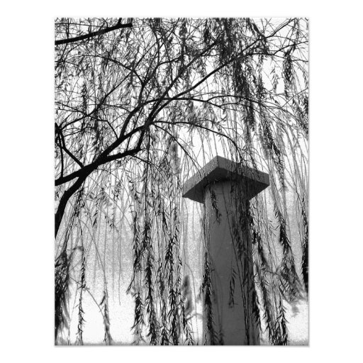 Column Under Weeping tree Black and White Picture Personalized Announcement