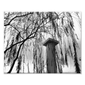 Column Under Weeping tree Black and White Picture Photographic Print
