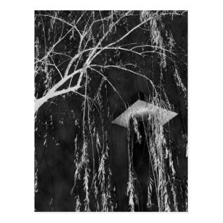 Column Under Weeping Tree Reverse Negative Postcard