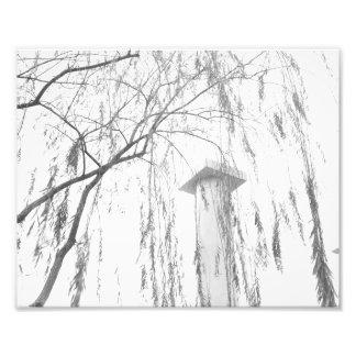 Columna bajo alto rango dinámico del árbol que llo impresión fotográfica