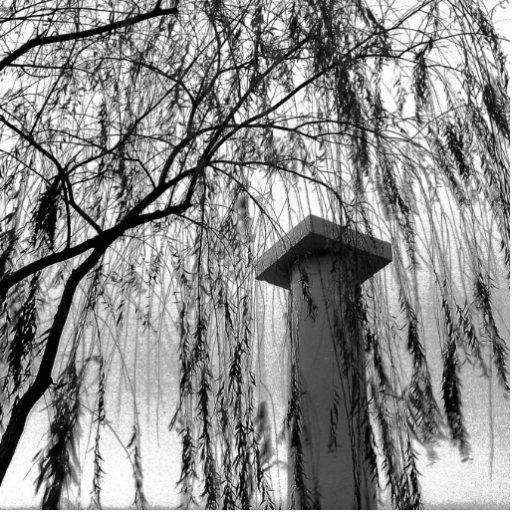 Columna bajo imagen blanco y negro del árbol que l fotoescultura vertical