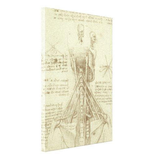 Columna espinal de la anatomía humana de Leonardo Impresion En Lona