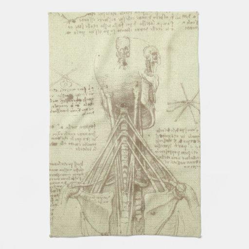 Columna espinal de la anatomía humana de Leonardo Toallas