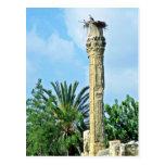 Columna romana, jerarquía de la cigüeña, Perge Postales