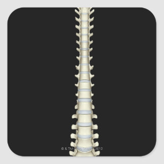 Columna vertebral 2 calcomania cuadradas personalizadas