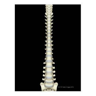 Columna vertebral 2 postal
