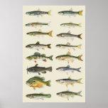 Columnas de pescados poster