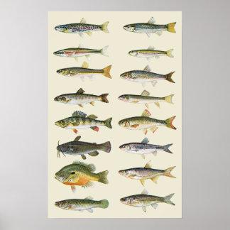 Columnas de pescados póster