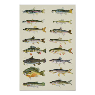 Columns of Fish Poster