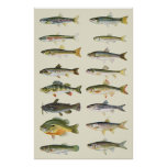 Columns of Fish Posters