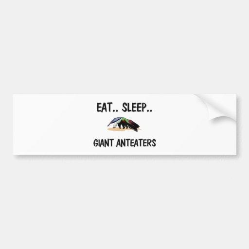 Coma los ANTEATERS GIGANTES del sueño Etiqueta De Parachoque