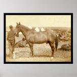 Comanche, caballo SD 1887 del ejército Poster