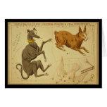 Comandante de Canis, Lepus, Columba Noachi Cela Sc Tarjetón