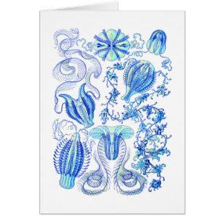 Comb jellies card