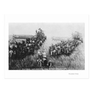 Combine Harvester Scene Postcard