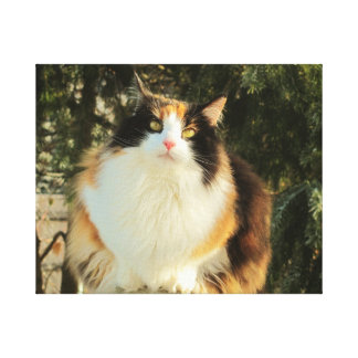 Come At Me Fat Calico Cat Canvas Print