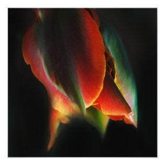 come closer 16.67'' x 16.67'' photo art