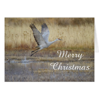 Come fly with me Merry Christmas Card