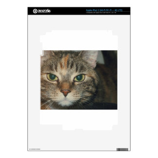 """""""Come if you dare"""" says the cat iPad 3 Skins"""