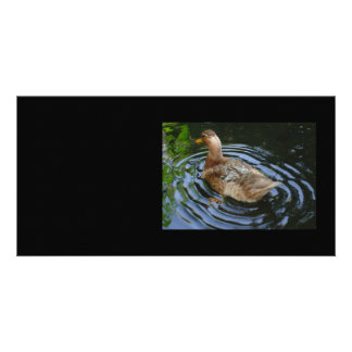 Come on, let me see you shake your tail feather... photo greeting card