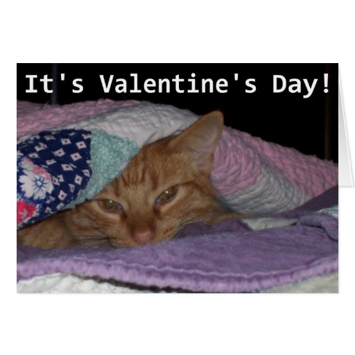 Come Snuggle Cat Valentine Greeting Card