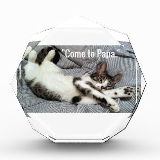 """Come To Papa"" Cat Award"