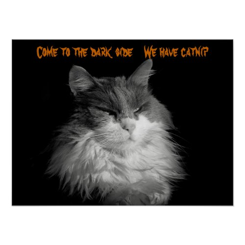 Come We have catnip Poster
