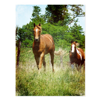 Come when Called, Two Horses Postcard