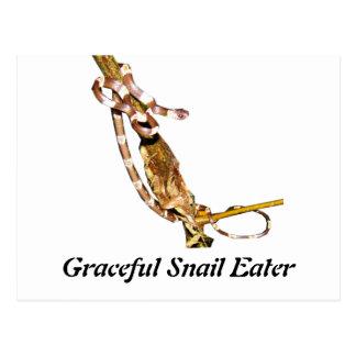 Comedor agraciado del caracol tarjeta postal