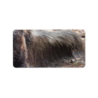 comedor animal de la hormiga del primer de la cola etiqueta de dirección