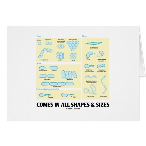 Comes In All Shapes & Sizes (Bacterial Morphology) Greeting Card