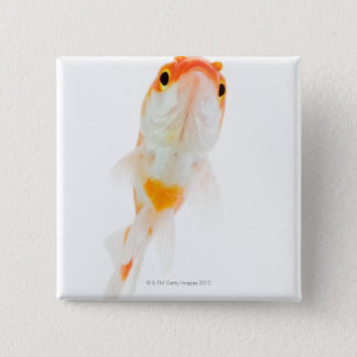 Comet / Comet-tailed goldfish Button