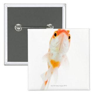 Comet / Comet-tailed goldfish Pin