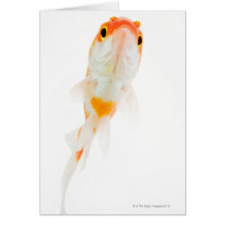 Comet / Comet-tailed goldfish Greeting Cards