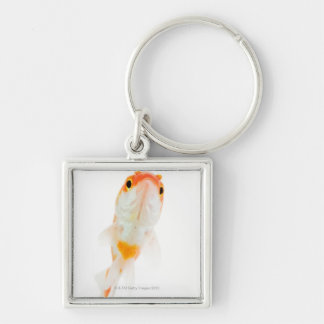 Comet / Comet-tailed goldfish Keychains