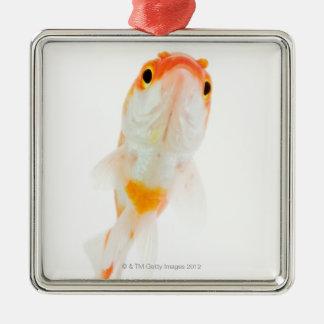 Comet / Comet-tailed goldfish Metal Ornament
