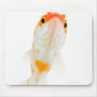 Comet / Comet-tailed goldfish Mouse Pad