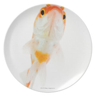 Comet / Comet-tailed goldfish Plate