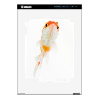 Comet / Comet-tailed goldfish Decals For iPad 3