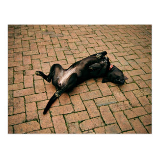 Comfortable black dog postcard