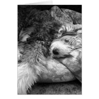 Comfortable Snooze Old English Sheepdog Card