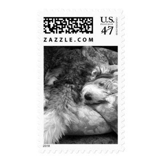 Comfortable Snooze Old English Sheepdog Postage