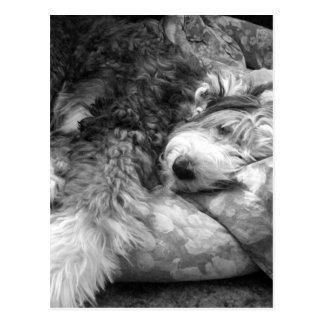 Comfortable Snooze Old English Sheepdog Postcard