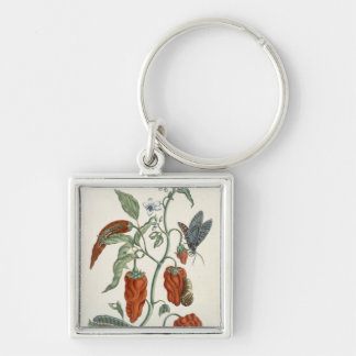 Comfrey, from 'A Curious Herbal', 1782 (colour eng Keychain