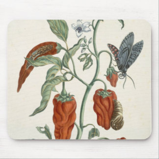 Comfrey, from 'A Curious Herbal', 1782 (colour eng Mouse Pad