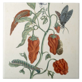 Comfrey, from 'A Curious Herbal', 1782 (colour eng Large Square Tile