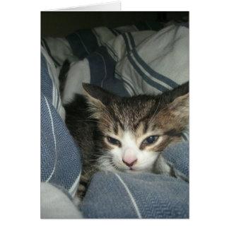Comfy Kitten Card