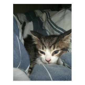 Comfy Kitten Postcard