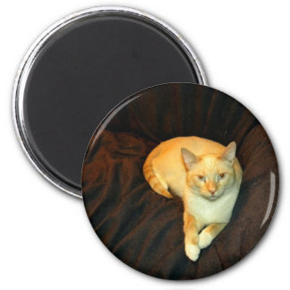 Comfy Kitty 2 Inch Round Magnet