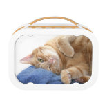 Comfy kitty lunchbox